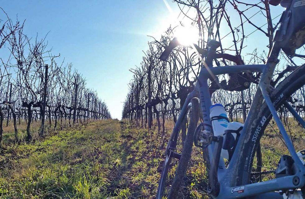 Off-season in the vineyards